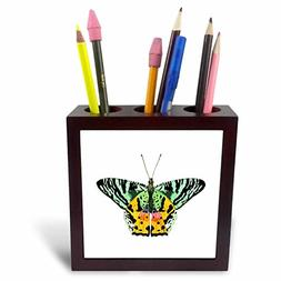 3dRose Butterfly Art - Image of Large Green Yellow and Orang
